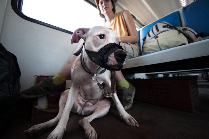 Правила по транспортировке животных в автобусе