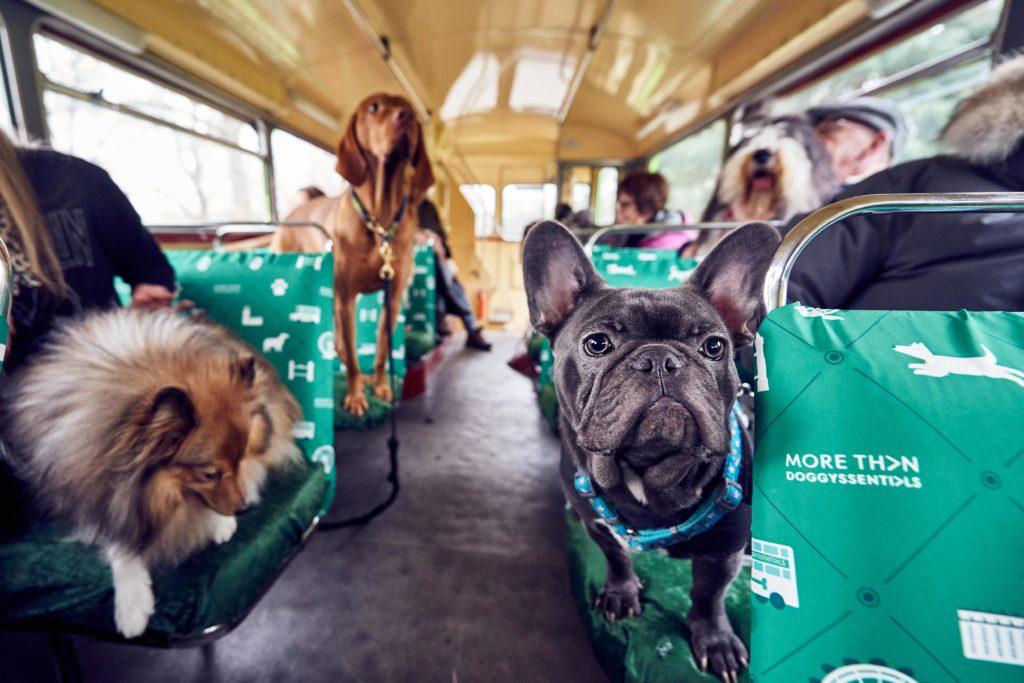Собаки в автобусе